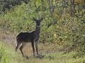8671  Spiked Buck.jpg