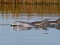 Dolphin Special.JPG